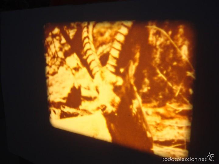 Cine: FAUNA ALPINA II CORTOMETRAJE-SUPER 8 MM –VINTAGE FILM - Foto 11 - 57283904