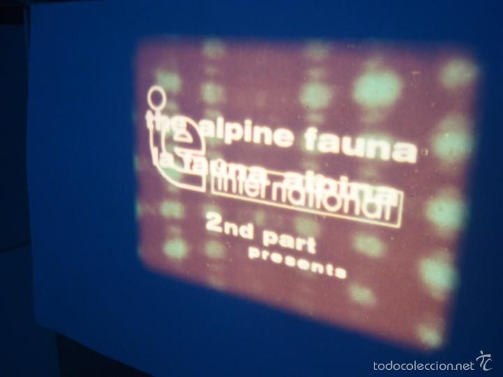 Cine: FAUNA ALPINA II CORTOMETRAJE-SUPER 8 MM –VINTAGE FILM - Foto 14 - 57283904