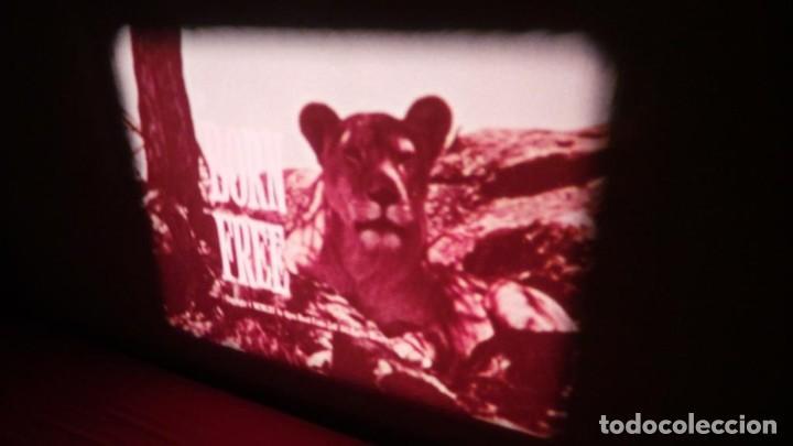 Cine: BORN FREE(Nacida Libre)-REDUCCIÓN, Versión Original Inglés PELÍCULA-SUPER 8 MM-RETRO-VINTAGE FILM - Foto 7 - 112674367