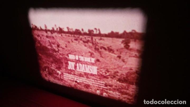 Cine: BORN FREE(Nacida Libre)-REDUCCIÓN, Versión Original Inglés PELÍCULA-SUPER 8 MM-RETRO-VINTAGE FILM - Foto 8 - 112674367