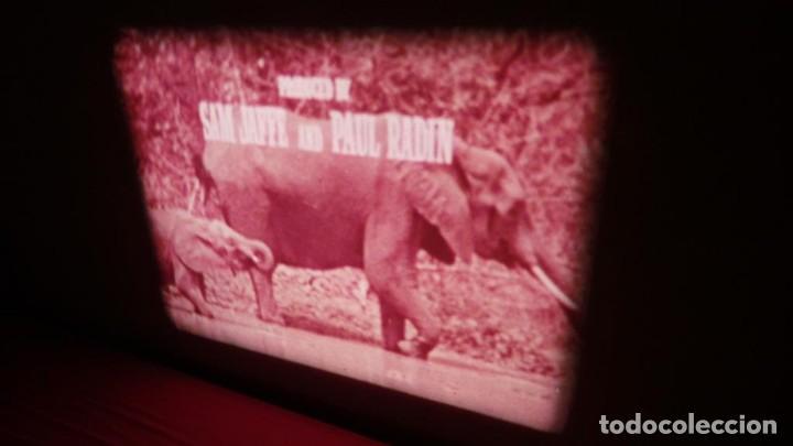 Cine: BORN FREE(Nacida Libre)-REDUCCIÓN, Versión Original Inglés PELÍCULA-SUPER 8 MM-RETRO-VINTAGE FILM - Foto 9 - 112674367
