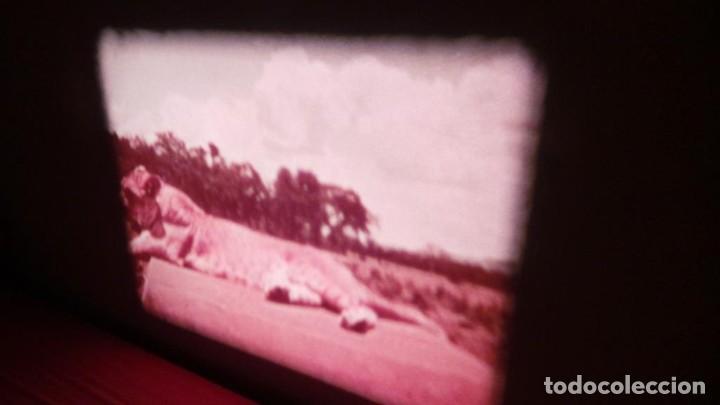 Cine: BORN FREE(Nacida Libre)-REDUCCIÓN, Versión Original Inglés PELÍCULA-SUPER 8 MM-RETRO-VINTAGE FILM - Foto 18 - 112674367