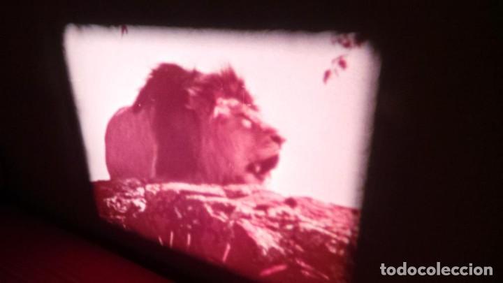 Cine: BORN FREE(Nacida Libre)-REDUCCIÓN, Versión Original Inglés PELÍCULA-SUPER 8 MM-RETRO-VINTAGE FILM - Foto 19 - 112674367