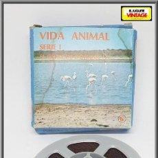 Cine: PELICULA SUPER 8 MM BIANCHI VIDA ANIMAL SERIE I EL COTO DE DOÑANA ( I ). Lote 137309754