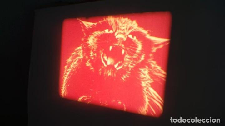 Cine: EL GATO NEGRO (TERROR)Roger Corman -PELÍCULA-SUPER 8 MM-1 x 180 MTS, RETRO-VINTAGE FILM # 2 - Foto 87 - 168527320