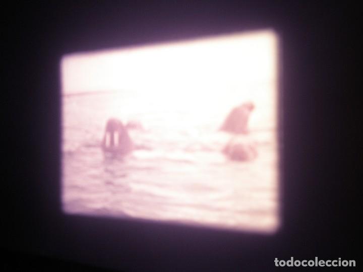 Cine: DOCUMENTAL BOBINA 90 MTS. - Foto 7 - 164616114