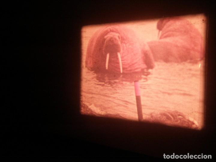 Cine: DOCUMENTAL BOBINA 90 MTS. - Foto 9 - 164616114