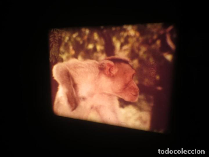 Cine: SANDOKÁN SERIE TV -SUPER 8 MM- 6 x 180 MTS-RETRO-VINTAGE FILM-EXCELLENT-COLOR IMPECABLE - Foto 281 - 189679777