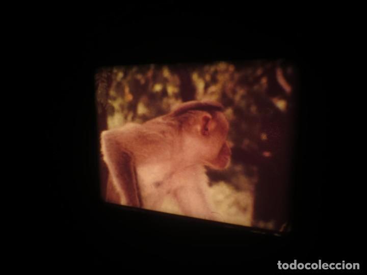 Cine: SANDOKÁN SERIE TV -SUPER 8 MM- 6 x 180 MTS-RETRO-VINTAGE FILM-EXCELLENT-COLOR IMPECABLE - Foto 284 - 189679777