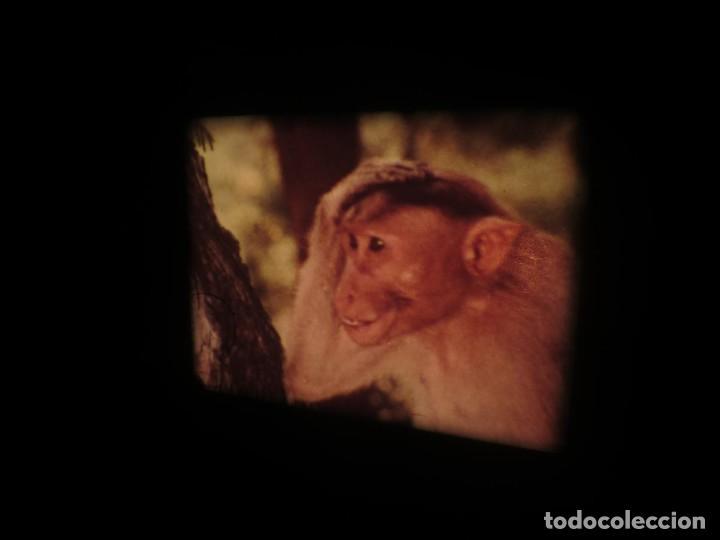 Cine: SANDOKÁN SERIE TV -SUPER 8 MM- 6 x 180 MTS-RETRO-VINTAGE FILM-EXCELLENT-COLOR IMPECABLE - Foto 286 - 189679777