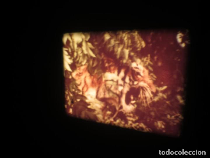 Cine: SANDOKÁN SERIE TV -SUPER 8 MM- 6 x 180 MTS-RETRO-VINTAGE FILM-EXCELLENT-COLOR IMPECABLE - Foto 339 - 189679777