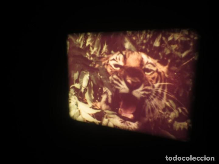 Cine: SANDOKÁN SERIE TV -SUPER 8 MM- 6 x 180 MTS-RETRO-VINTAGE FILM-EXCELLENT-COLOR IMPECABLE - Foto 340 - 189679777