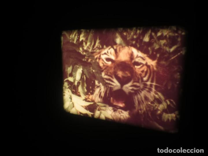 Cine: SANDOKÁN SERIE TV -SUPER 8 MM- 6 x 180 MTS-RETRO-VINTAGE FILM-EXCELLENT-COLOR IMPECABLE - Foto 341 - 189679777