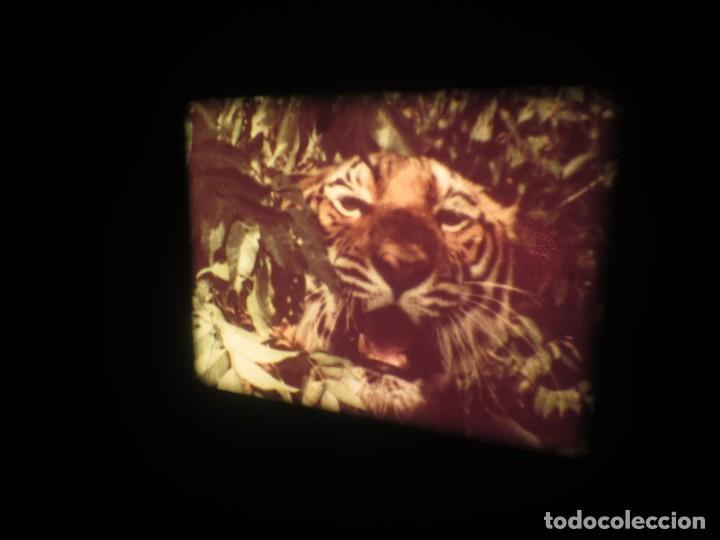 Cine: SANDOKÁN SERIE TV -SUPER 8 MM- 6 x 180 MTS-RETRO-VINTAGE FILM-EXCELLENT-COLOR IMPECABLE - Foto 342 - 189679777