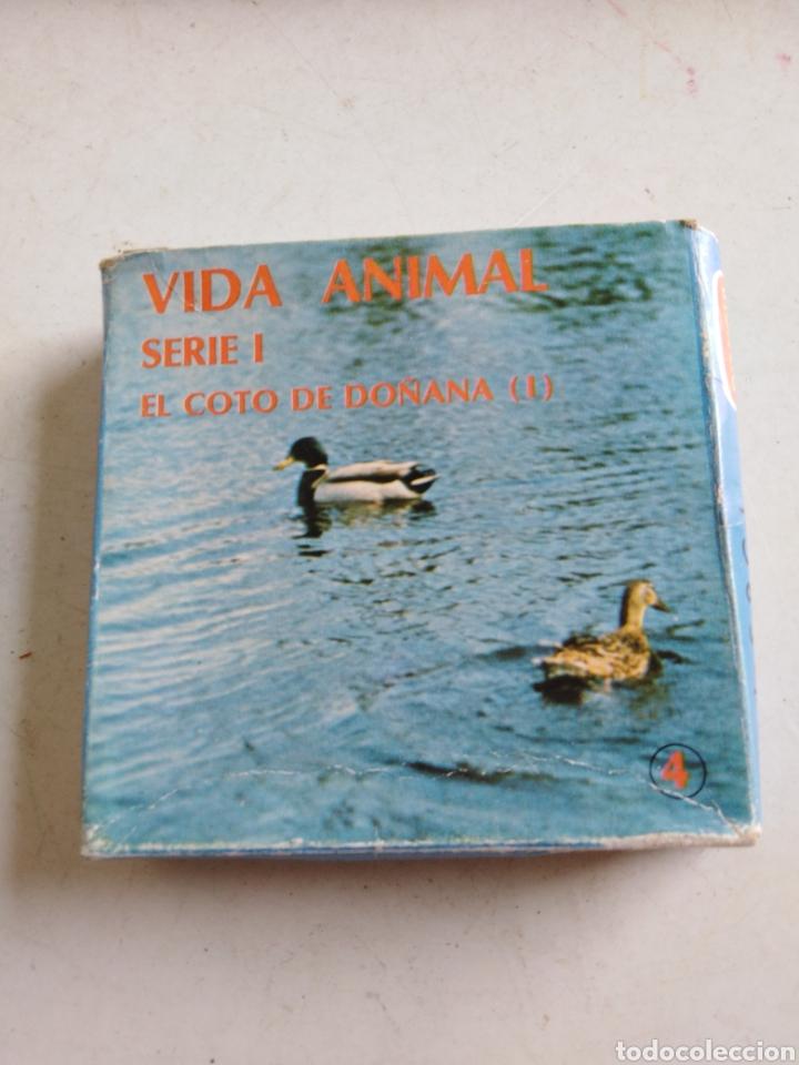Cine: Lote de 11 películas Súper 8, vida animal y mundo submarino ( bianchi ) - Foto 5 - 214095346