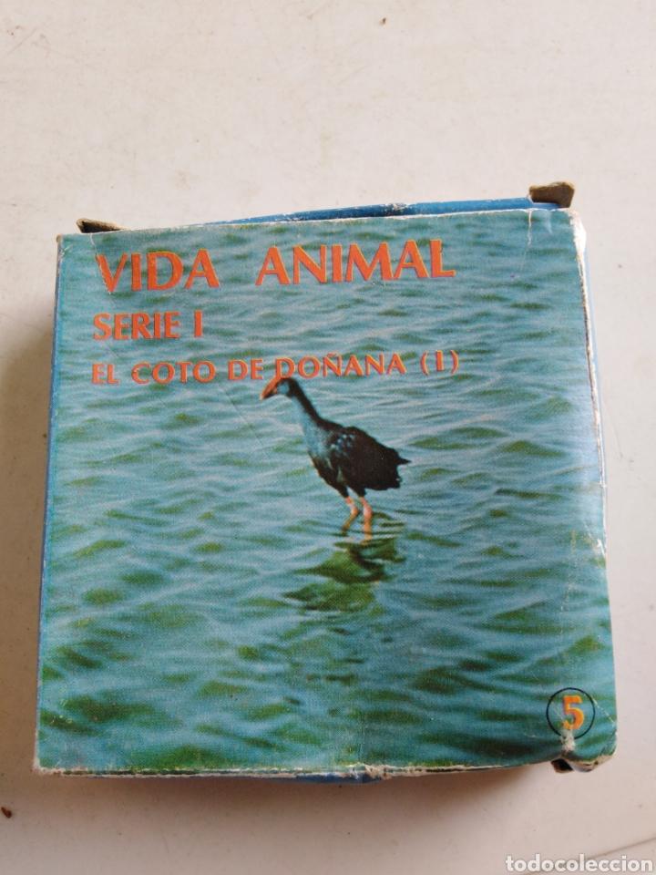 Cine: Lote de 11 películas Súper 8, vida animal y mundo submarino ( bianchi ) - Foto 6 - 214095346