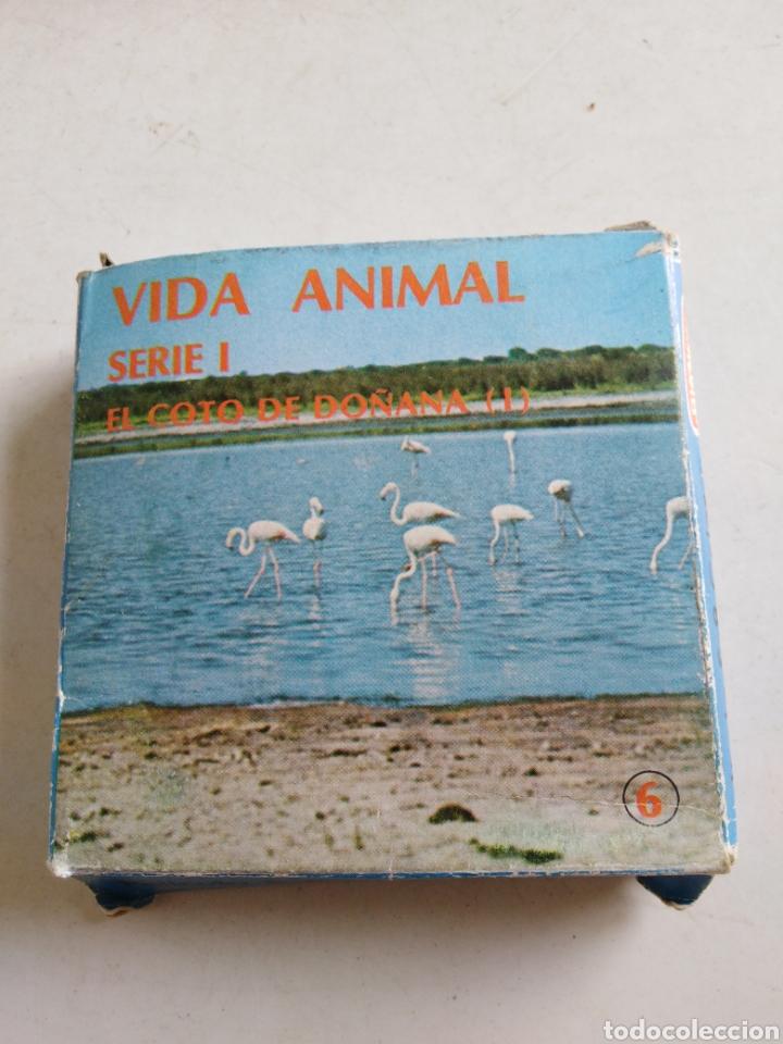 Cine: Lote de 11 películas Súper 8, vida animal y mundo submarino ( bianchi ) - Foto 7 - 214095346