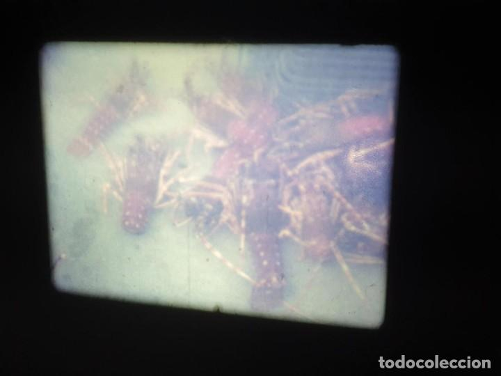 Cine: AMATEUR-VIVEROS DE MARISCO-(1974) 1 X 60 MTS SUPER 8 MM, RETRO VINTAGE FILM - Foto 7 - 234908815