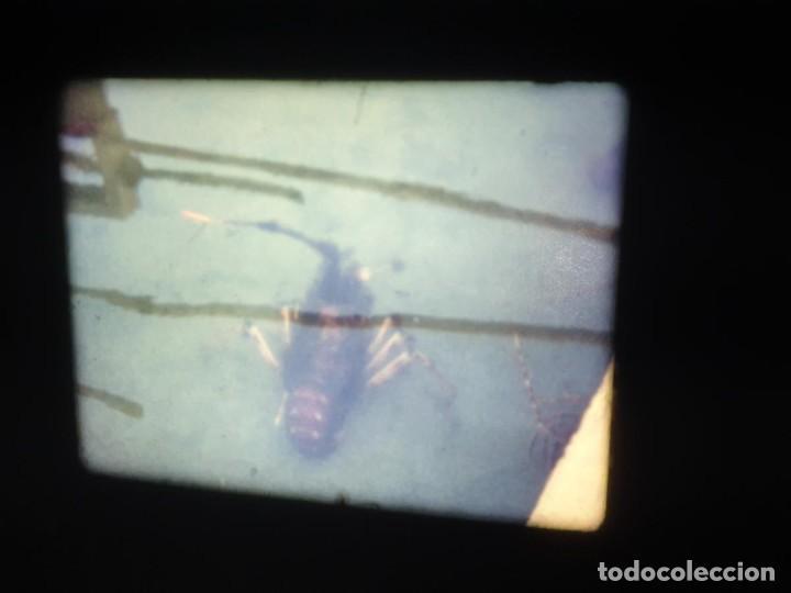 Cine: AMATEUR-VIVEROS DE MARISCO-(1974) 1 X 60 MTS SUPER 8 MM, RETRO VINTAGE FILM - Foto 9 - 234908815