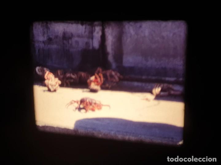 Cine: AMATEUR-VIVEROS DE MARISCO-(1974) 1 X 60 MTS SUPER 8 MM, RETRO VINTAGE FILM - Foto 48 - 234908815