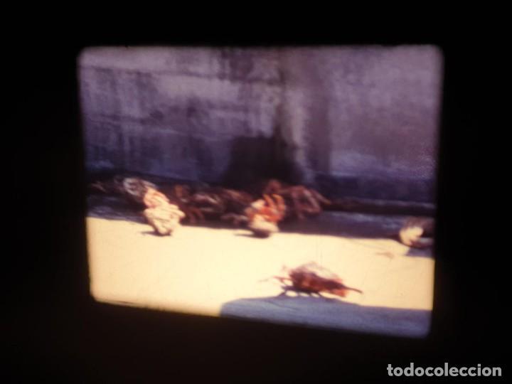 Cine: AMATEUR-VIVEROS DE MARISCO-(1974) 1 X 60 MTS SUPER 8 MM, RETRO VINTAGE FILM - Foto 49 - 234908815