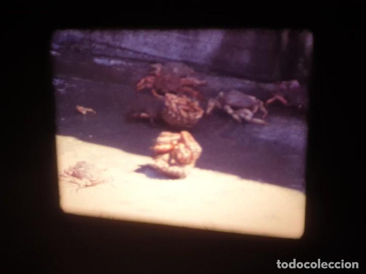 Cine: AMATEUR-VIVEROS DE MARISCO-(1974) 1 X 60 MTS SUPER 8 MM, RETRO VINTAGE FILM - Foto 50 - 234908815