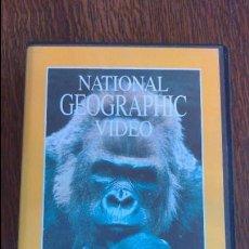 Cine: VHS NATIONAL GEOGRAFIC. Lote 57378858