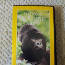 Cine: NATIONAL GEOGRAPHIC VIDEO 30 VHS EL GORILA. Lote 105879455