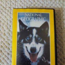 Cine: NATIONAL GEOGRAPHIC VIDEO 32 VHS ESOS MARAVILLOSOS PERROS. Lote 105879827