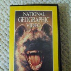 Cine: NATIONAL GEOGRAPHIC VIDEO 34 VHS LEONES Y HIENAS ETERNOS ENEMIGOS. Lote 105880535