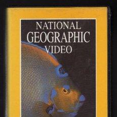 Cine: NATIONAL GEOGRAPHIC VIDEO (CINTA VHS: JOYAS DEL MAR CARIBE) - DURACIÓN: 60 MINUTOS -. Lote 159655950