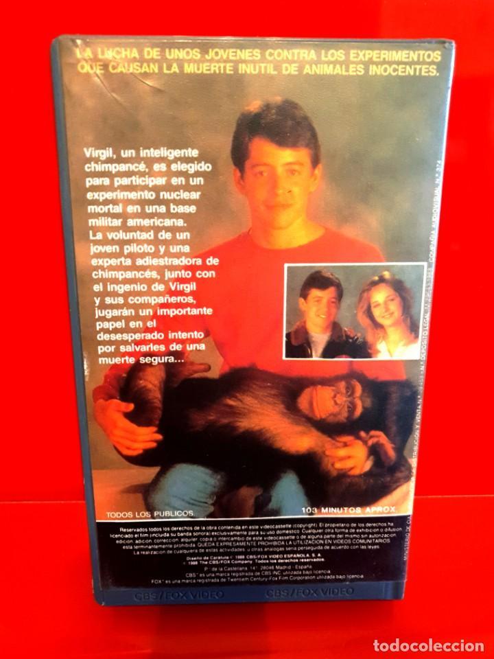 Cine: PROYECTO X (1987) - Jonathan Kaplan, Matthew Broderick - Foto 2 - 198833846