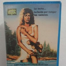 Cine: OCTAVIA - DAVID BEAIRD - SUSAN CURTIS , NEIL KINSELLA - FOREST 1986. Lote 254787210