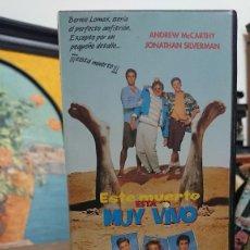 Cine: ESTE MUERTO ESTA MUY VIVO - TED KOTCHEFF - ANDREW MCCARTHY , JONATHAN SILVERMAN - IVEX 1992. Lote 295496568