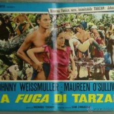 Cine: QO12D LA FUGA DE TARZAN JOHNNY WEISSMULLER SET 8 POSTERS ORIGINAL ITALIANO 47X68. Lote 68653581