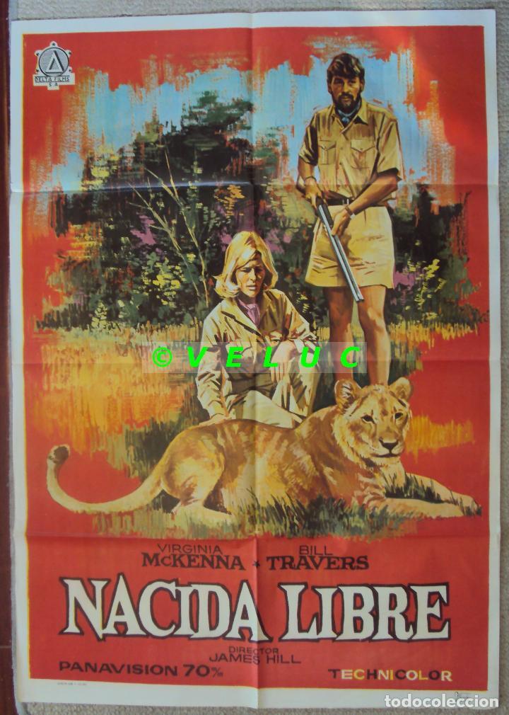 NACIDA LIBRE. POSTER ORIGINAL ESTRENO ESPAÑA 1967. 70X100 (Cine- Posters y Carteles - Drama)