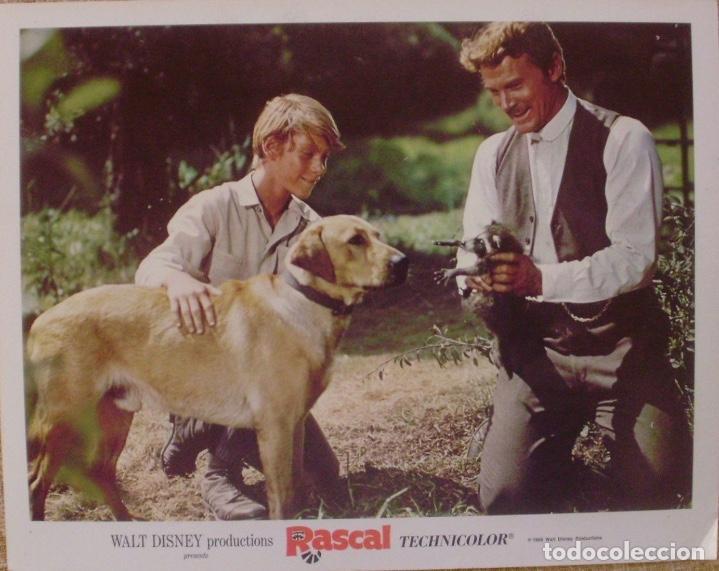 DISNEY, RASCAL, LOBBY CARD, 1969, WALT DISNEY PRODUCTIONS, TECHNICOLOR (Cine - Posters y Carteles - Infantil)