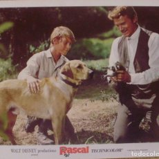 Cine: DISNEY, RASCAL, LOBBY CARD, 1969, WALT DISNEY PRODUCTIONS, TECHNICOLOR. Lote 88816796