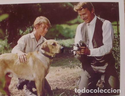 Cine: Disney, Rascal, Lobby Card, 1969, Walt Disney Productions, Technicolor - Foto 2 - 88816796