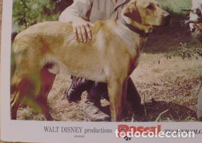 Cine: Disney, Rascal, Lobby Card, 1969, Walt Disney Productions, Technicolor - Foto 3 - 88816796
