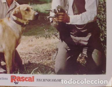 Cine: Disney, Rascal, Lobby Card, 1969, Walt Disney Productions, Technicolor - Foto 4 - 88816796