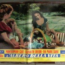 Cine: YH36 EL ARBOL DE LA VIDA ELIZABETH TAYLOR MONTGOMERY CLIFT POSTER ORIGINAL ITALIANO 47X68. Lote 114927139