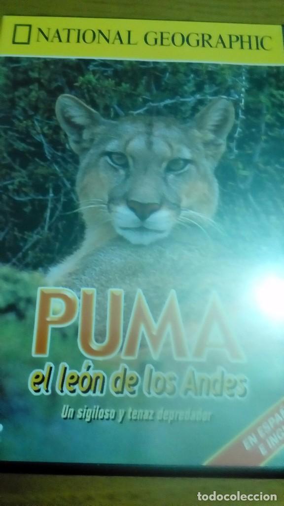 PUMA EL LEÓN DE LOS ANDES, NATIONAL GEOGRAPHIC (Cine - Posters y Carteles - Documentales)