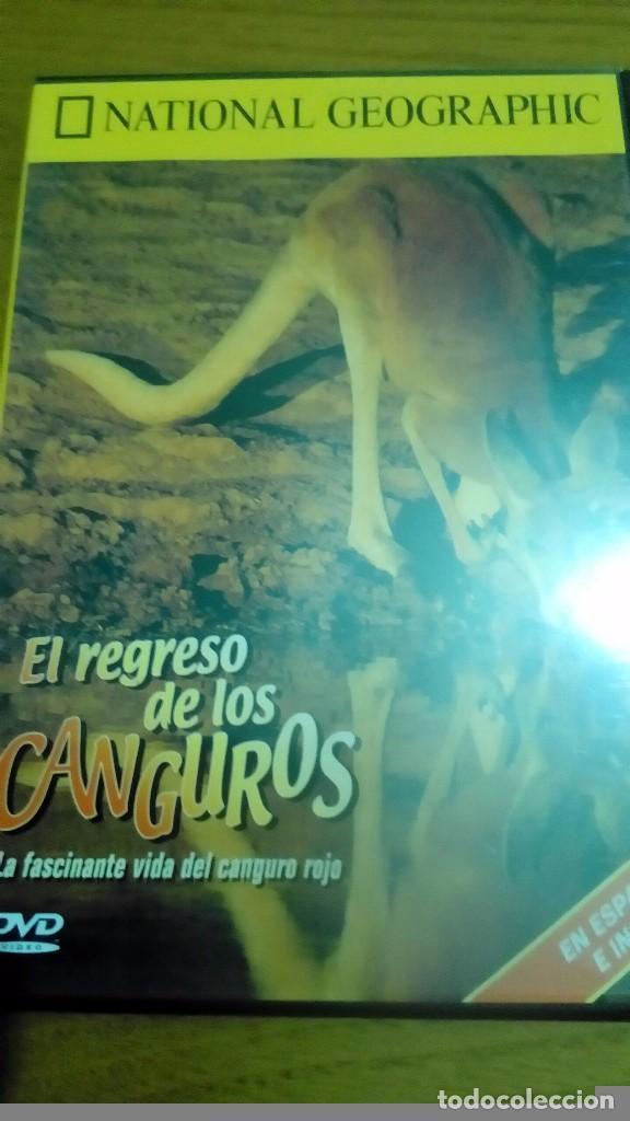 EL REGRESO DE LOS CANGUROS, LA FASCINANTE VIDA DEL CANGURO ROJO, NATIONAL GEOGRAPHIC (Cine - Posters y Carteles - Documentales)