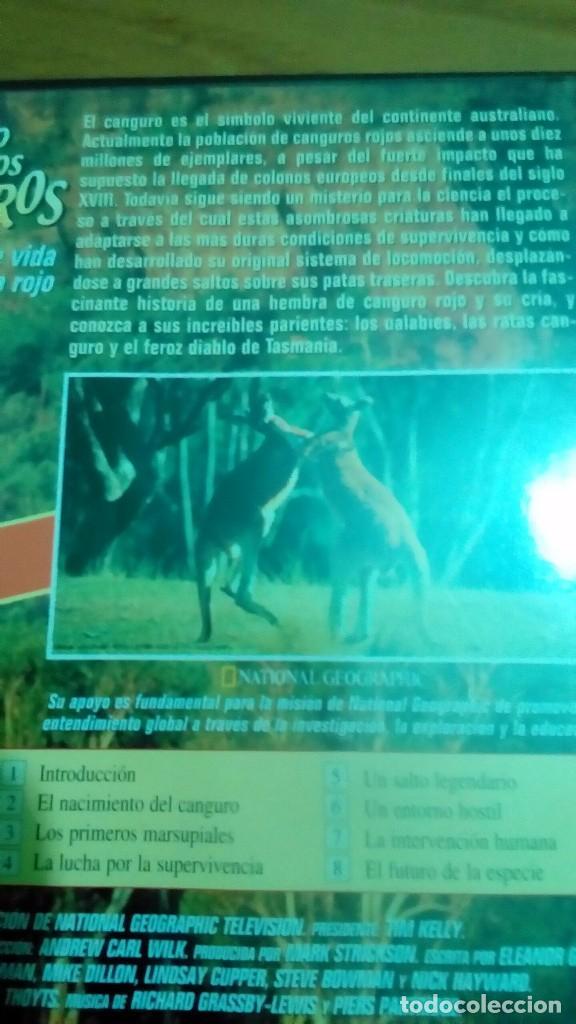 Cine: El regreso de los canguros, la fascinante vida del canguro rojo, National Geographic - Foto 2 - 120703531
