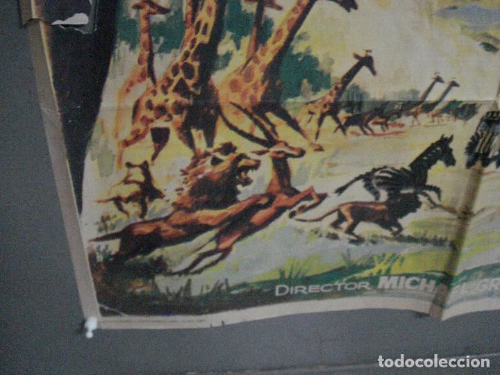 Cine: CDO 5315 LA LEY DE LAS FIERAS DOCUMENTAL AFRICA SALVAJE SERENGETI POSTER ORIGINAL 70X100 ESTRENO - Foto 5 - 218495161