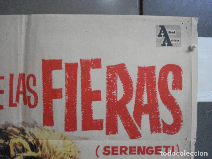 Cine: CDO 5315 LA LEY DE LAS FIERAS DOCUMENTAL AFRICA SALVAJE SERENGETI POSTER ORIGINAL 70X100 ESTRENO - Foto 6 - 218495161