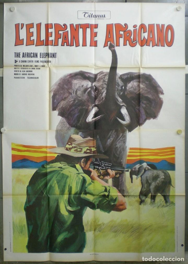 UB32D EL COLOSO DE LA SELVA ELEFANTE DOCUMENTAL AFRICA POSTER ORIGINAL ITALIANO 140X200 (Cine - Posters y Carteles - Documentales)