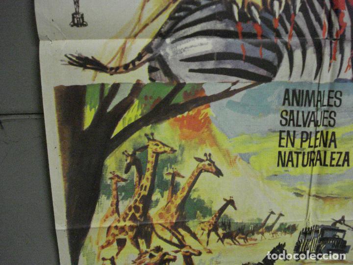 Cine: CDO 7693 LA LEY DE LAS FIERAS DOCUMENTAL AFRICA SALVAJE SERENGETI POSTER ORIGINAL 70X100 ESTRENO - Foto 4 - 229577770