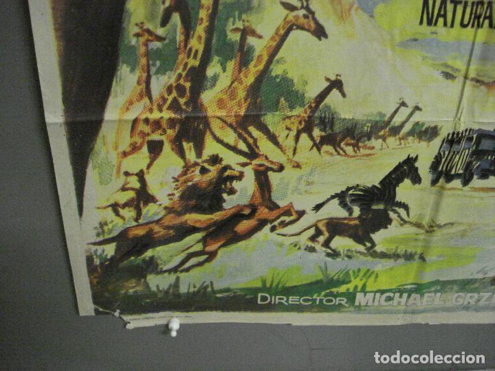 Cine: CDO 7693 LA LEY DE LAS FIERAS DOCUMENTAL AFRICA SALVAJE SERENGETI POSTER ORIGINAL 70X100 ESTRENO - Foto 5 - 229577770